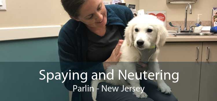 Spaying and Neutering Parlin - New Jersey