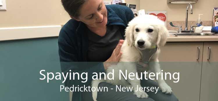 Spaying and Neutering Pedricktown - New Jersey