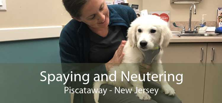Spaying and Neutering Piscataway - New Jersey
