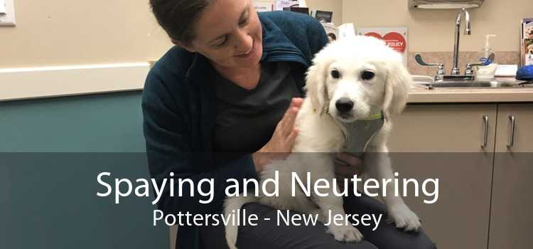 Spaying and Neutering Pottersville - New Jersey