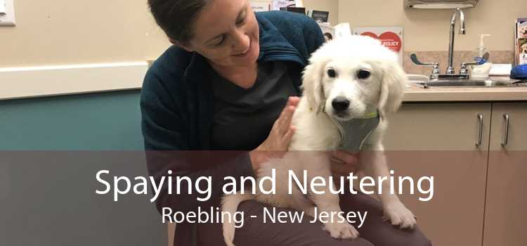 Spaying and Neutering Roebling - New Jersey