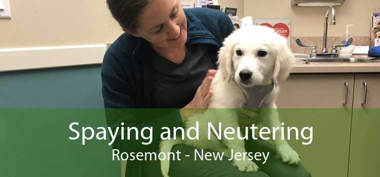 Spaying and Neutering Rosemont - New Jersey