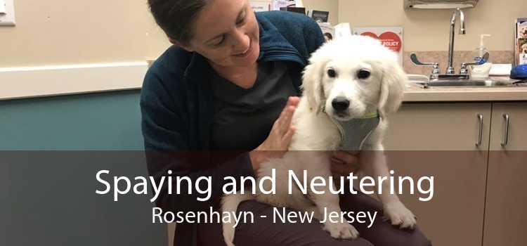 Spaying and Neutering Rosenhayn - New Jersey