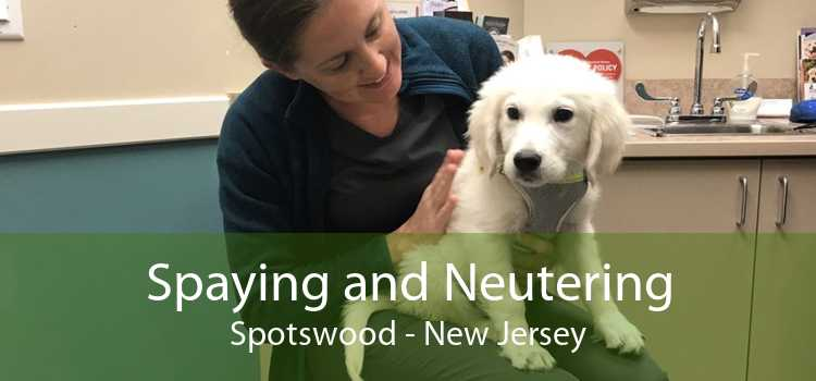 Spaying and Neutering Spotswood - New Jersey