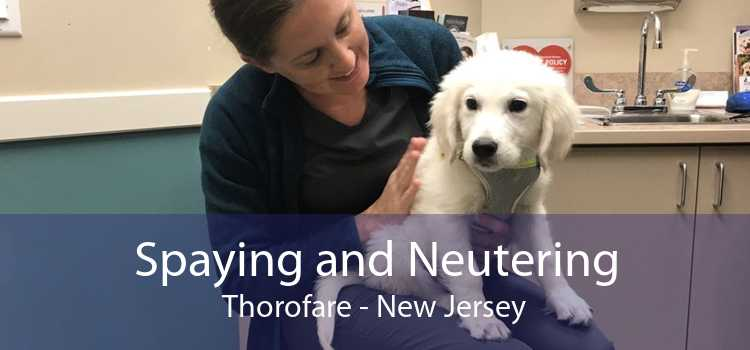 Spaying and Neutering Thorofare - New Jersey
