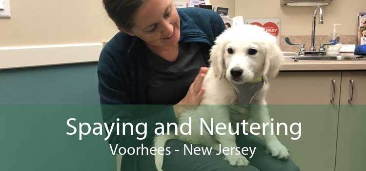 Spaying and Neutering Voorhees - New Jersey