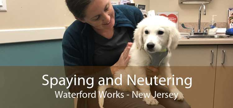 Spaying and Neutering Waterford Works - New Jersey