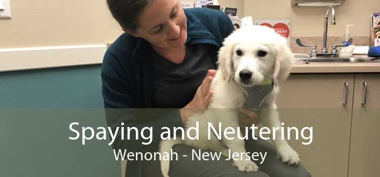 Spaying and Neutering Wenonah - New Jersey