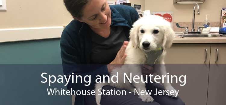 Spaying and Neutering Whitehouse Station - New Jersey