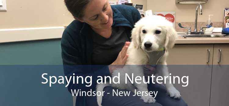 Spaying and Neutering Windsor - New Jersey