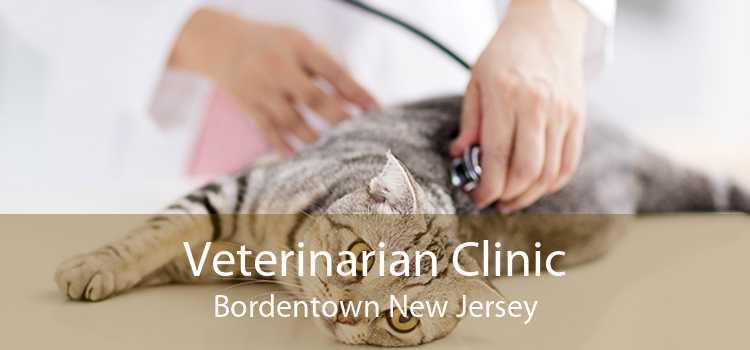Veterinarian Clinic Bordentown New Jersey