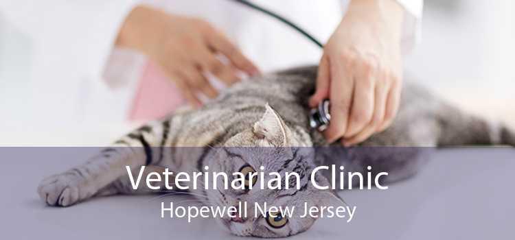 Veterinarian Clinic Hopewell New Jersey