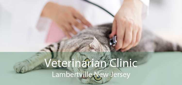 Veterinarian Clinic Lambertville New Jersey