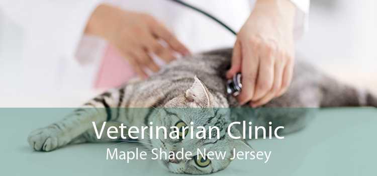 Veterinarian Clinic Maple Shade New Jersey
