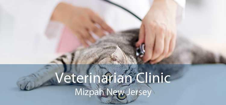 Veterinarian Clinic Mizpah New Jersey