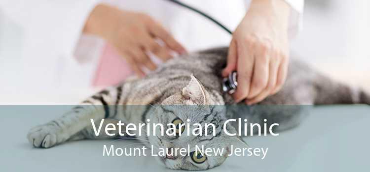 Veterinarian Clinic Mount Laurel New Jersey