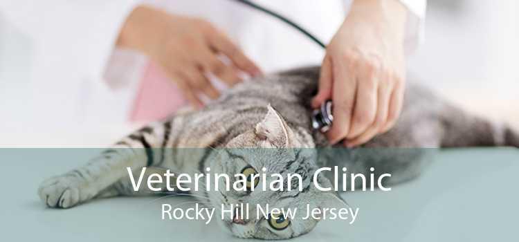 Veterinarian Clinic Rocky Hill New Jersey