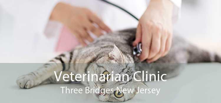 Veterinarian Clinic Three Bridges New Jersey