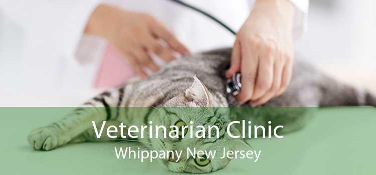 Veterinarian Clinic Whippany New Jersey